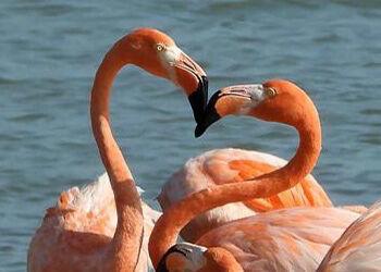 Pure Bonaire 2020 Calendar Celebrates Bonaire's Avian Diversity