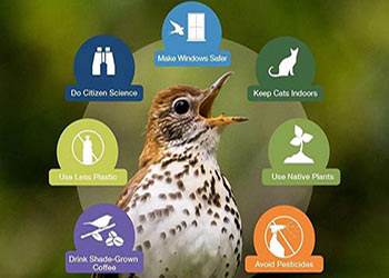 3 Billion Birds are Gone, 7 Simple Actions to Help