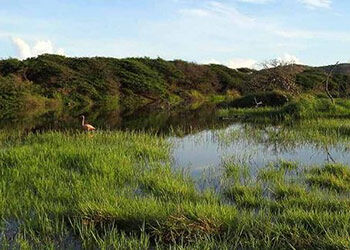 Birders Seek Protection for Bonaire's Freshwater Wetlands